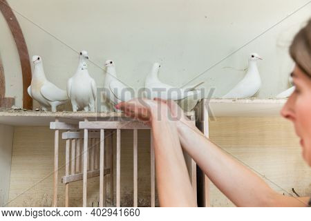 Woman holding a pigeon in a dovecote on her hand