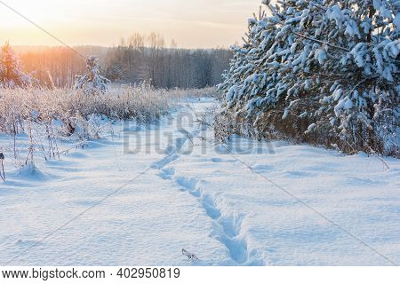 Along The Snow Cover In The Rays Of The Winter Sun There Is A Lonely Path, Traces Of A Man. Horizont