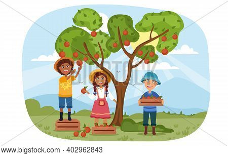 Three Young Children Helping To Harvest Apples In The Orchard Picking The Ripe Fruit From The Tree,