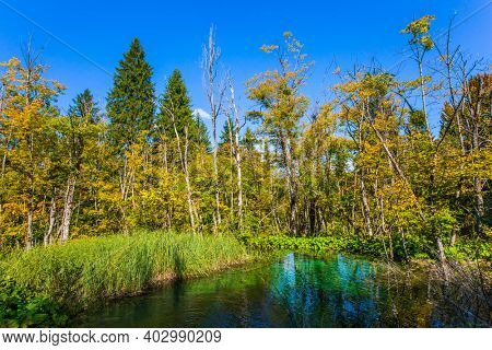 The transparent shallow lake reflects the forest. Plitvice Lakes Park in Croatia. Plitvice Lakes are beautiful karst lakes. Travel to Central Europe