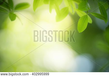 Beautiful Nature View Green Leaf On Blurred Greenery Background Under Sunlight With Bokeh And Copy S