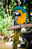 Closeup portrait of a colorful parrot on tree branch poster