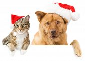 Cat and Dog with red hats above white banner poster