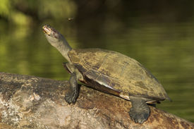 Schildkröte und bee