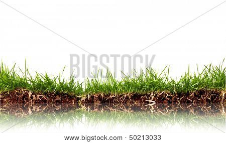 Fresh spring green grass with soil isolated on white background.