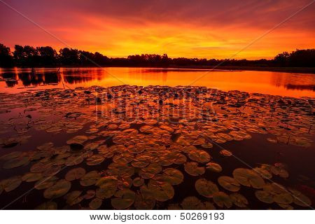 Tranquil Lilypad Sunrise