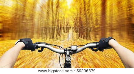 Mountain biking down hill descending fast on bicycle in autumn forest. View from bikers eyes.