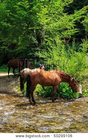 Three Horses Watering On A Forest Creek.vertical