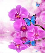 Beautiful purple orchid with butterflies Morpho reflection on water level poster