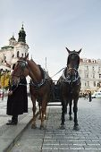a horse drawn cart in the old part of prague, czech republic. poster