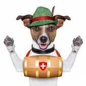 swiss rescue dog with a barrel and paws up poster