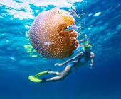 Young lady snorkeling in a clear tropical sea and watching the jelly fish poster