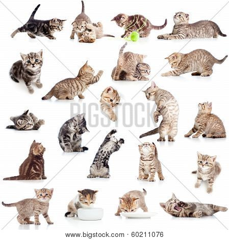 Collection Or Set Playful Cat Kitten Isolated On White Background