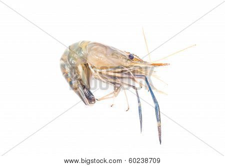 Prepare Shrimp Cooking Isolated