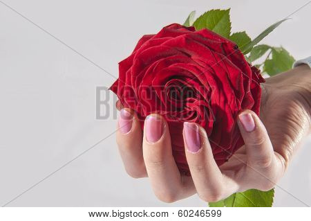 Rose In A Hand