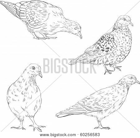 set of linear drawing doves, hand drawn vector illustration poster