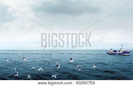 Seagulls On Sea