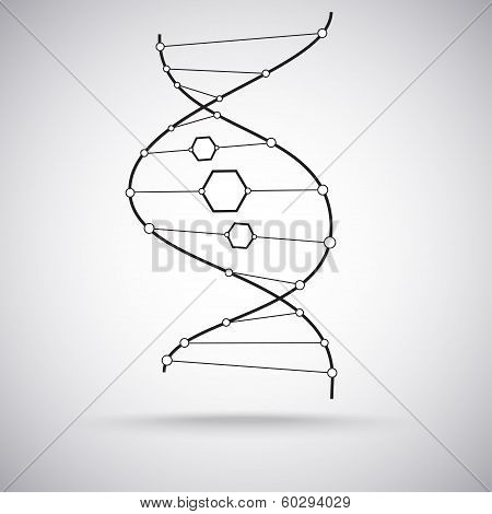 The Dna Molecule