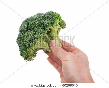 Fresh Broccoli In Hand For Cooking.