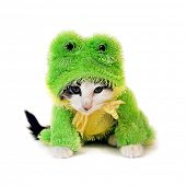 a cute kitten in a frog costume looking very mad poster