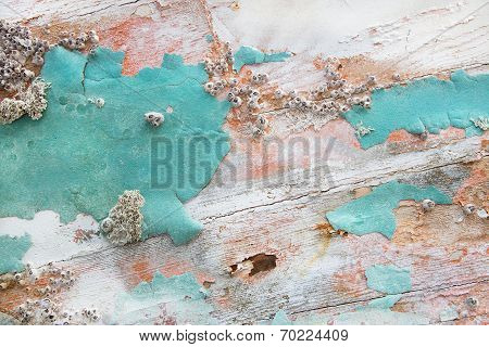 Old wooden shabby chic background with aged calcification of mussels and fossils in turquoise pastel colors. poster