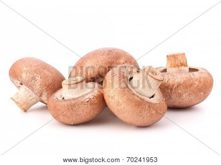 Brown champignon mushroom group isolated on white background cutout