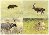 African savannah mammals in their natural habitat poster