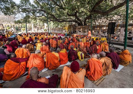 Buddhist Monks Sitting Under The Bodhi Tree, Bodhgaya, India