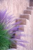 Purple and green tall grasses fronting an adobe wall in Santa Fe NM poster