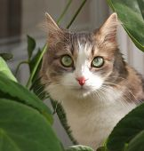 Cat near leaves of plants. Shallow DOF. poster
