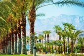 Palms Road Coachella Valley. Highway 111 in Indian Wells California USA. poster