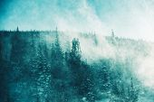 The Winter Storm. Extreme Winter Storm Conditions with High Wind and Blowing Snow in the Forest. Winter Scenery poster