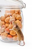 Tiny house mouse (Mus musculus) near walnut and hazelnut seeds jar poster