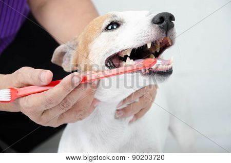 hand brushing dog's tooth for dental care