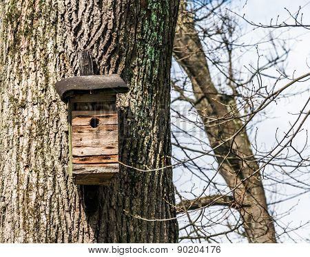 Nest Box On A Tree In A Public Park