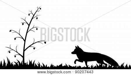 Silhouette of fox in the grass.