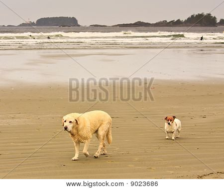 Dogs on Cox Bay