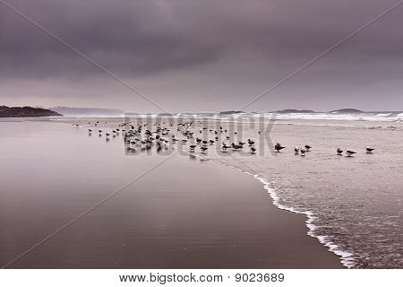 This photo was taken in a stormy morning of long beach, Pacific Rim National Park, BC, Tofino, Canada poster