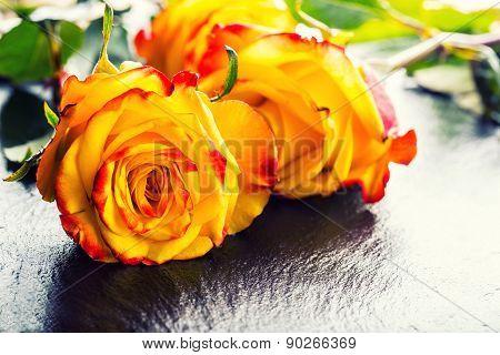 Orange rose. Yellow rose. Several orange roses on Granite background
