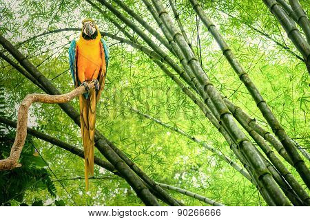 Parrot In The Jungle