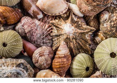 Mixed Sea Shells Together