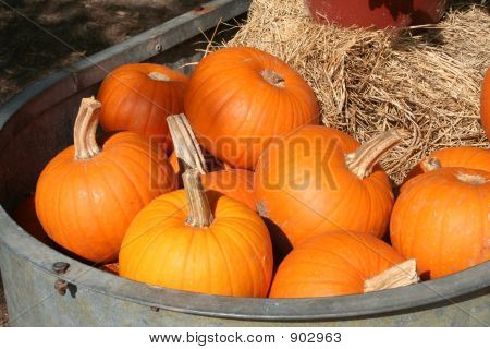 Tub Of Pumpkins