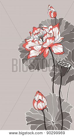 Big White Red Lotus On Grey Vector Illustration