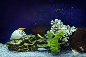 Close-up of aquarium with fishes and coral poster