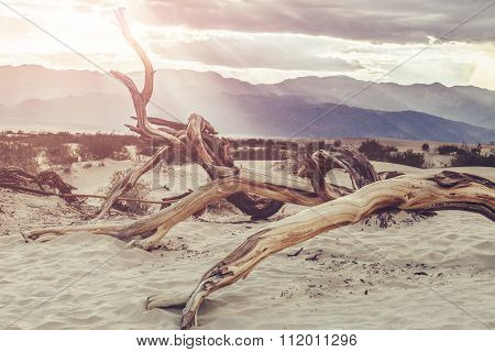 Dead Tree in Death Valley Desert