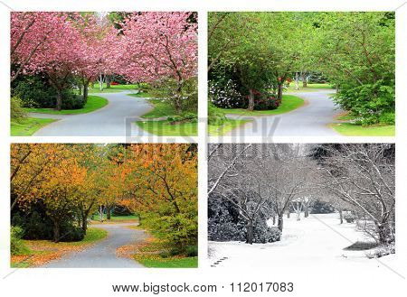 Spring, Summer, Fall and Winter. Four seasons photographed on the same street from the exact same location. Snow is falling in the winter picture. It is not noise.