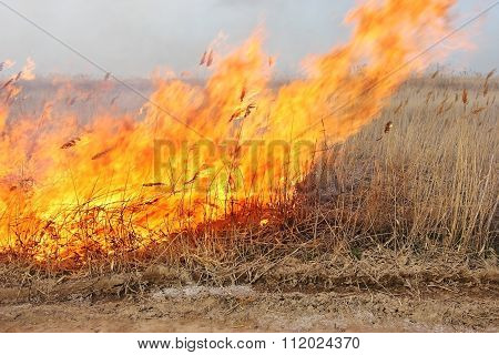 Fire In The Steppe. Burning Dry Reeds