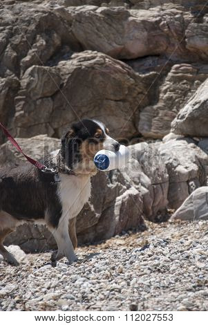 Dog Trained For Rescue While Training At Sea Shore