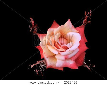 Beautiful Red Rose Turning Into Water Splashes