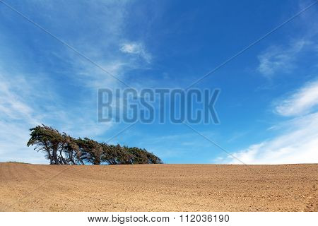 Windsept Trees Standing On A Ploughed Field, Southland, New Zealand